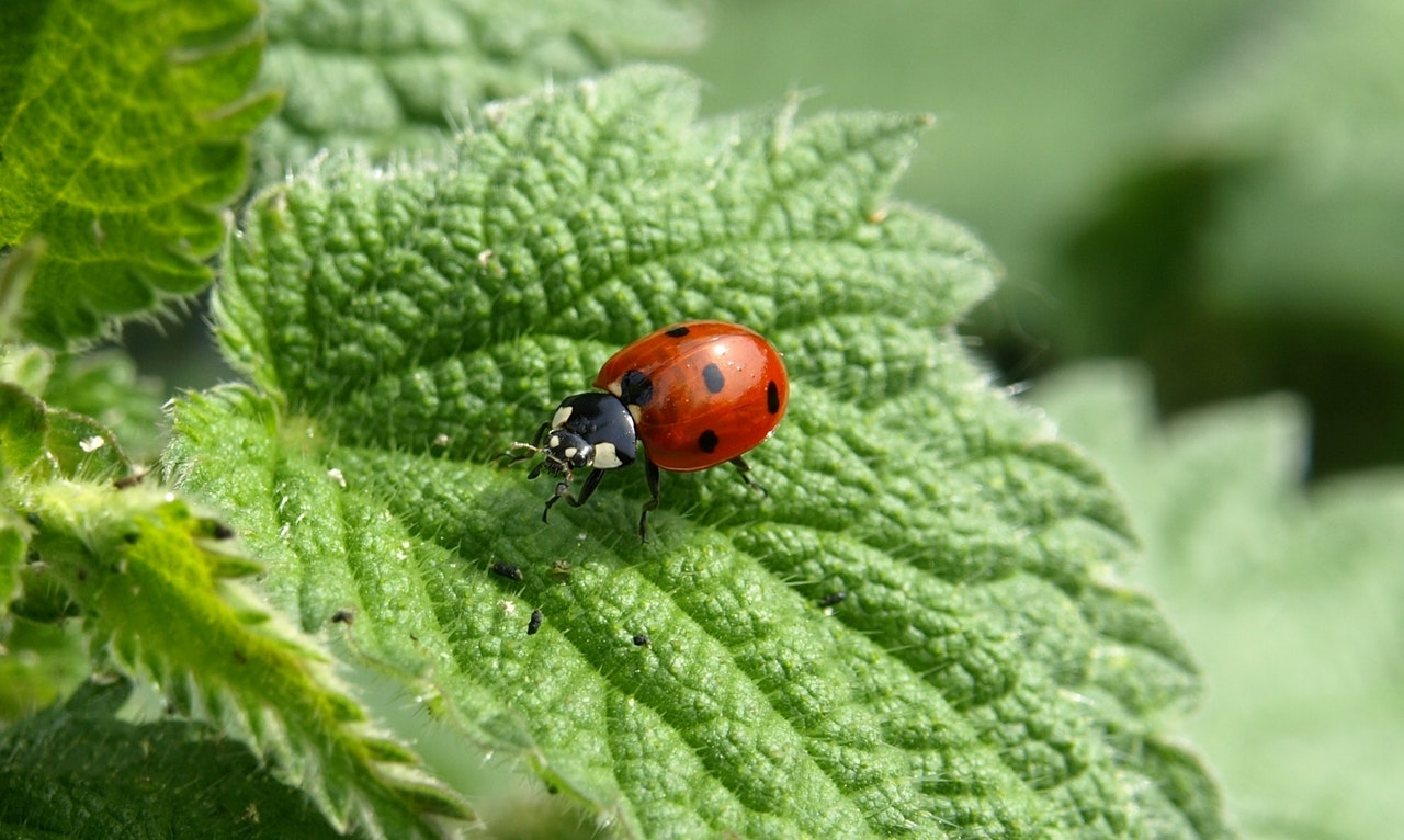 Stop! in the name of ladybugs