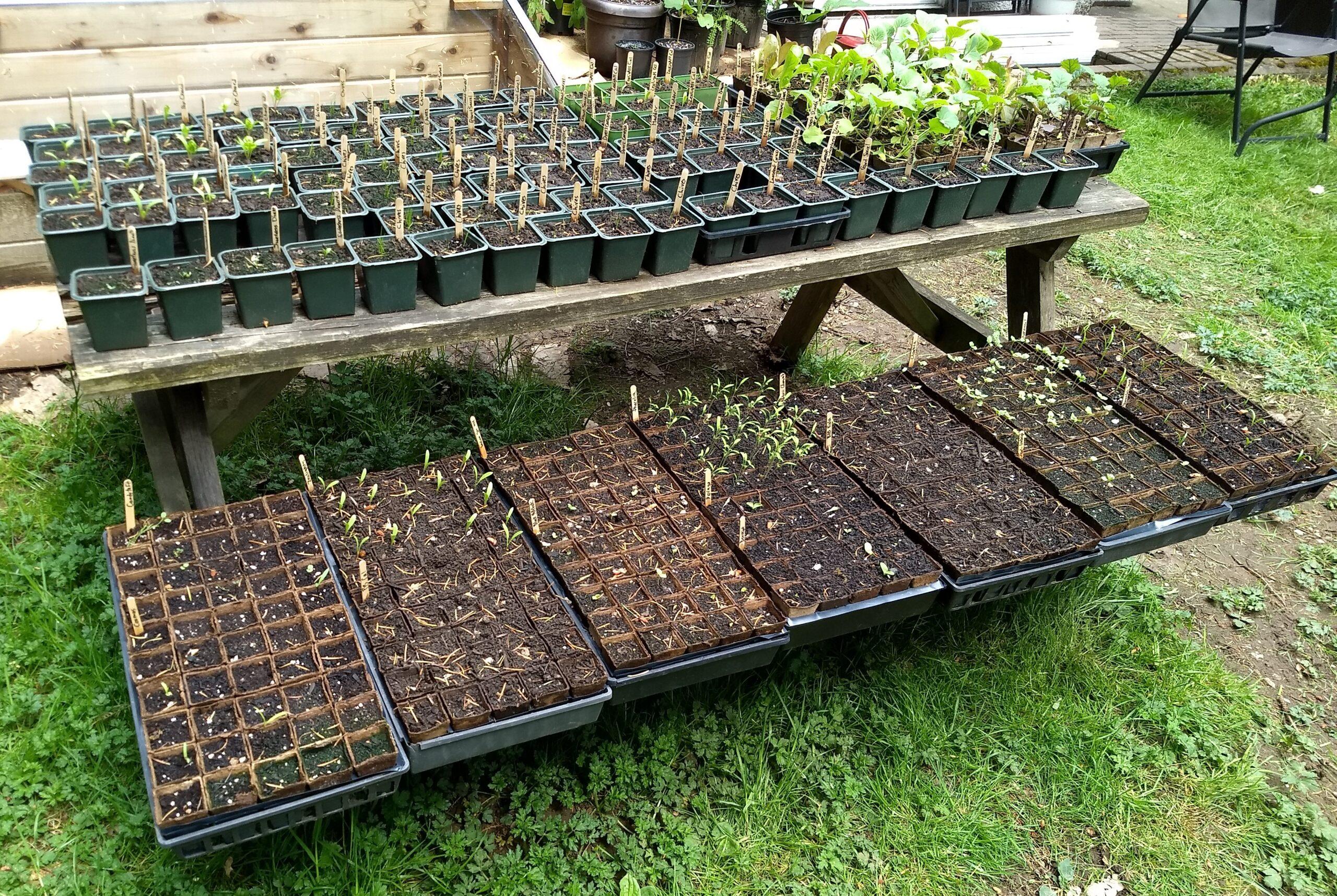 My wee plant nursery